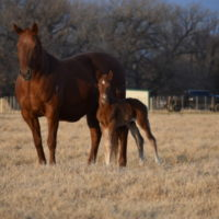 Purdy Illusion x Copy Cat Colt2