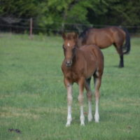Purdy Illusion x Copy Cat Colt
