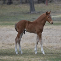 Purdy Illusion x Copy Cat Colt4